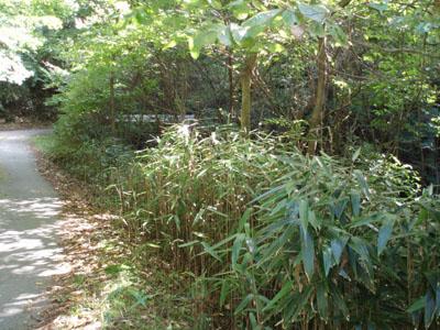 道路際のすず竹