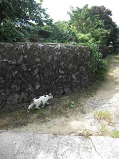 007-2 猫と小路
