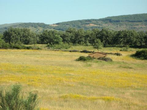 黄色い花が咲く野原(エストレマドゥラ地方)