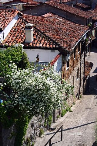白い花がある階段(Garganta la Olla)