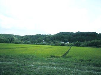 田園風景-1