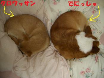 014_convert_20090405110105.jpg