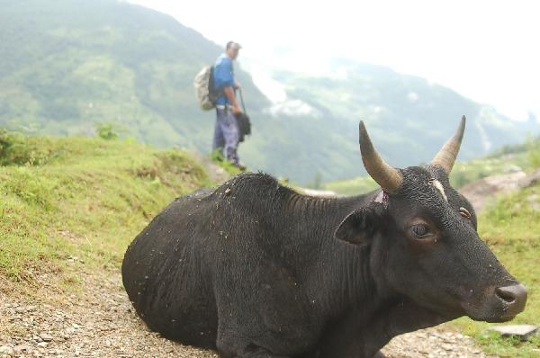 15_nepal_himalaya_125.jpg