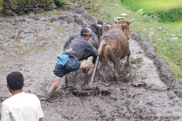 15_nepal_himalaya_135.jpg