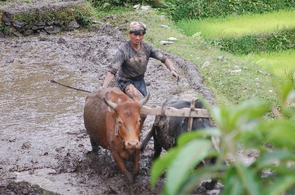 15_nepal_himalaya_136.jpg