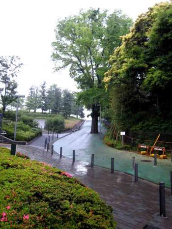 桧町公園横の坂道