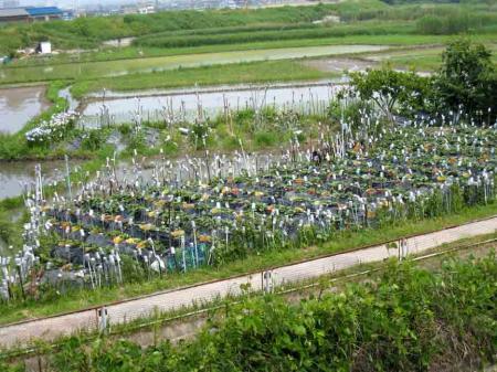 庄内川堤防下のカンカン