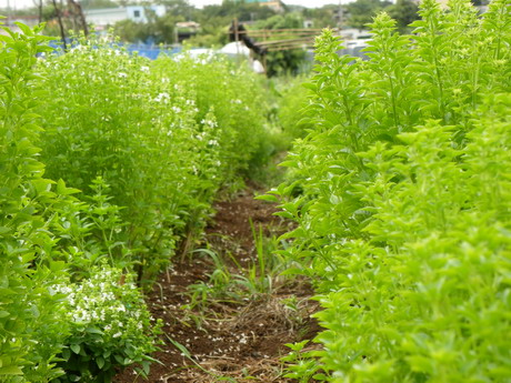 花の農園 044