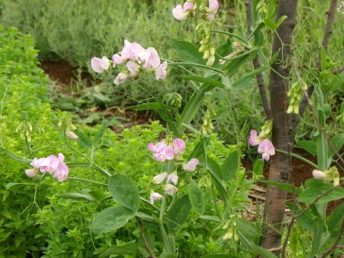 花の農園 041