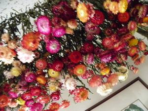 花の農園 048