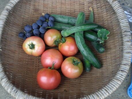 収穫 200808