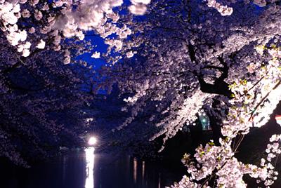 弘前の夜桜