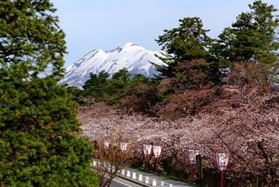 岩木山と桜