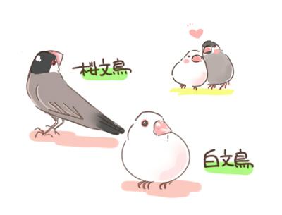 桜文鳥と白文鳥