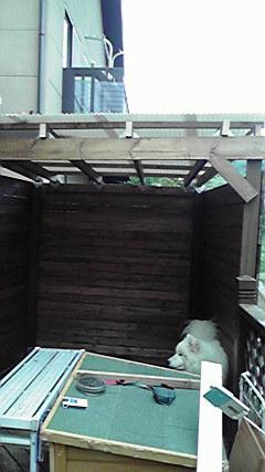 屋根も張った