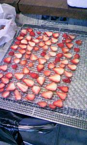 乾燥イチゴ乾燥前