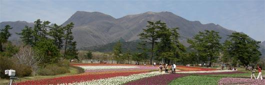 春の花公園