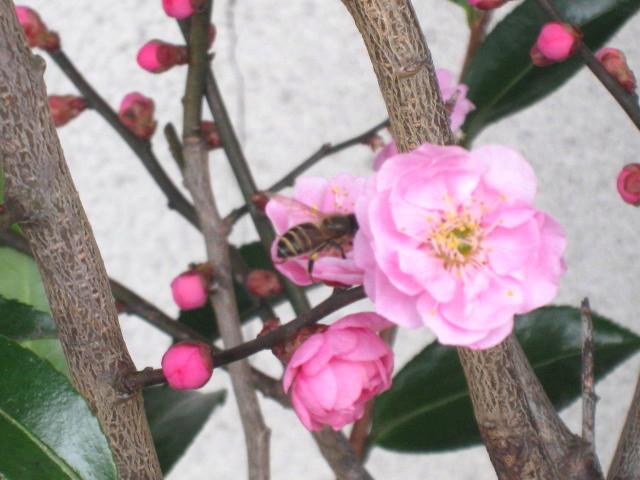 IMG_3092 春