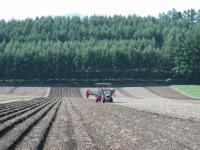 去年は小豆だった畑です