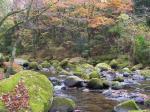 渓谷内の紅葉