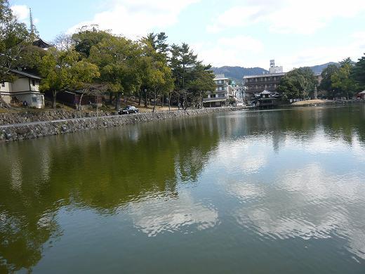 冬の猿沢の池