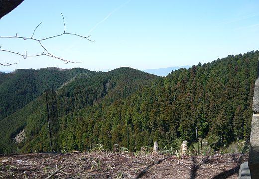 吉野山植樹-1