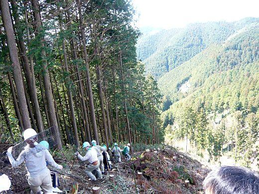 吉野山植樹-2
