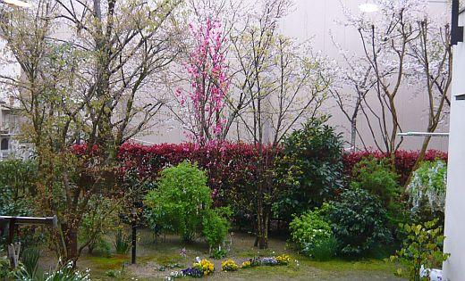 菱屋の家の春2009