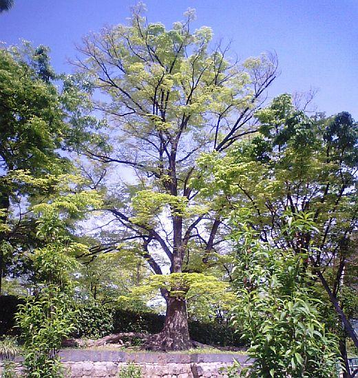 真田山公園の新緑2009