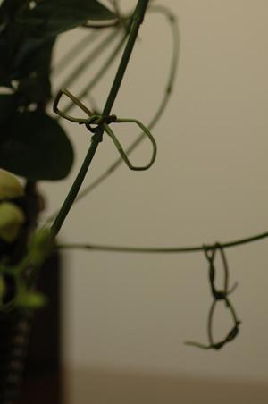 arenji2011122-3.jpg