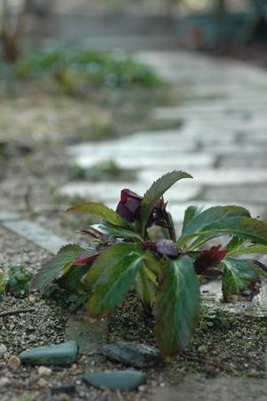 purpleshade20112303-1.jpg