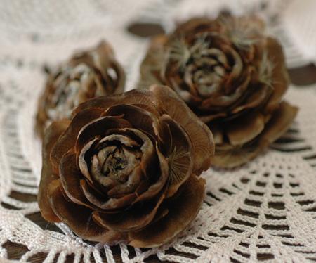 rosepine2011128-1.jpg