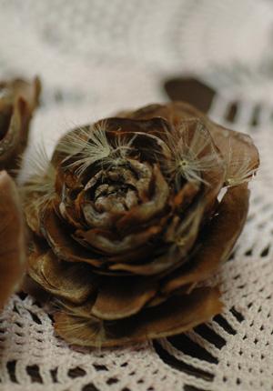 rosepine2011128-2.jpg