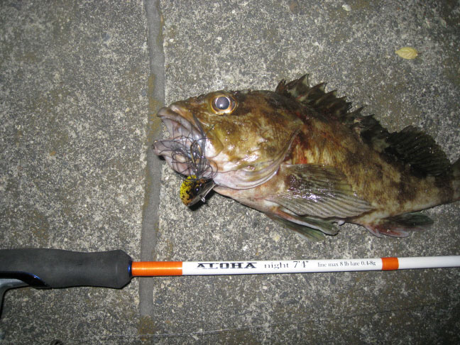vanpra-rockfish2.jpg