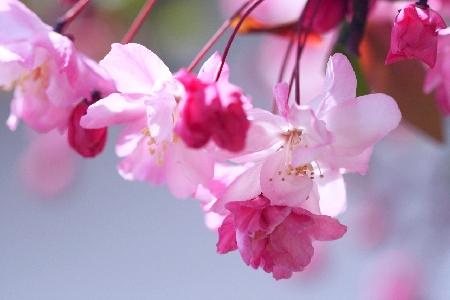春の詩2 11000