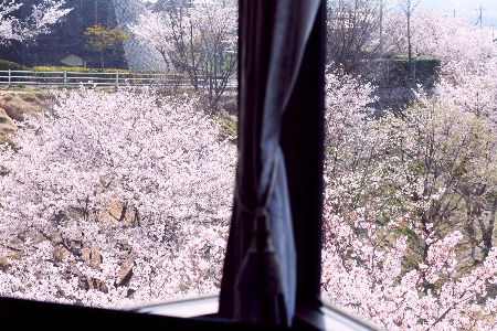 我が家の窓から・・・