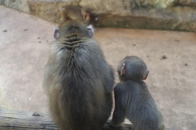 猿親子後ろ向き