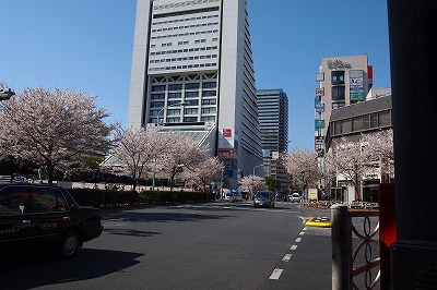 0412sakura.jpg