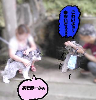 亀岡文殊シェリー