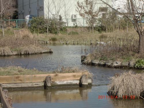 20111304+冬のビオトープ・ュ+003_convert_20110307230202