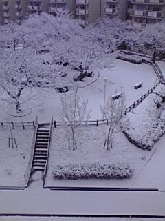 110211_0755~雪化粧.jpg