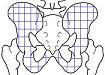 骨盤細分化