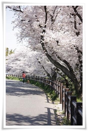 2011-04-13 小江戸~新河岸川~江戸 (7)