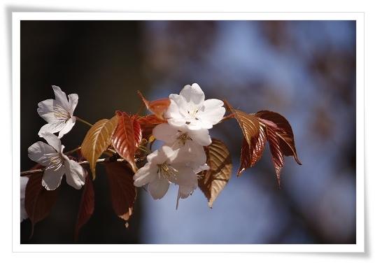 2011-04-13 小江戸~新河岸川~江戸 (4)