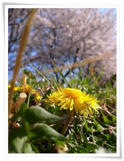 2011-04-13 小江戸~新河岸川~江戸 (5)