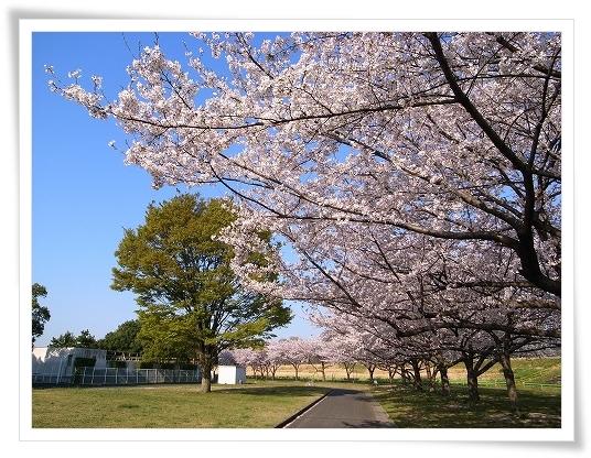 2011-04-13 小江戸~新河岸川~江戸 (2)