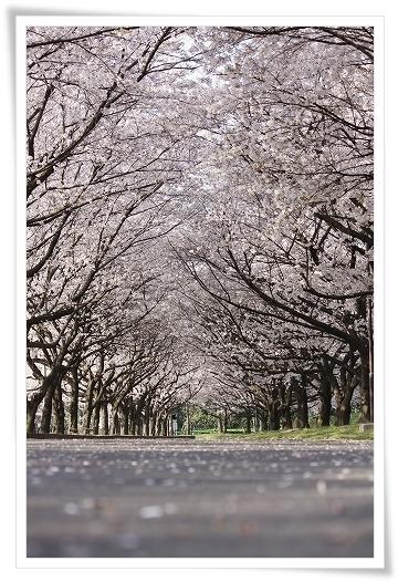 2011-04-13 小江戸~新河岸川~江戸 (3)