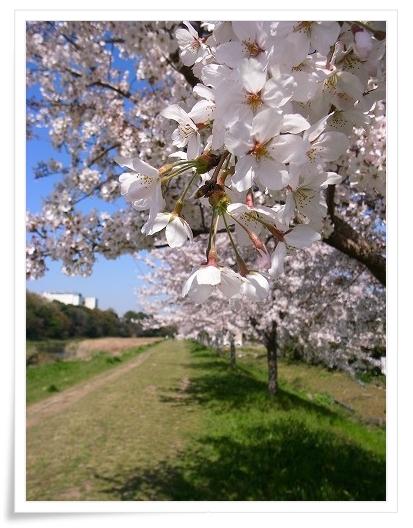 2011-04-13 小江戸~新河岸川~江戸 (11)