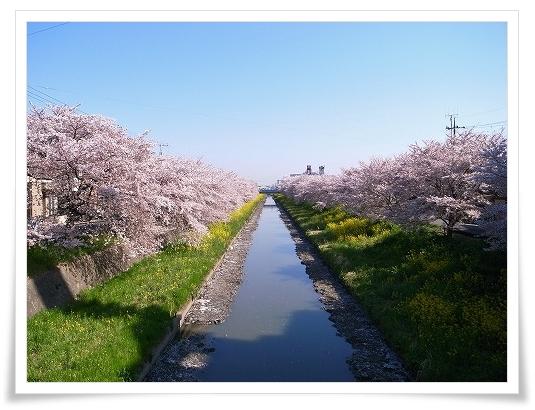 2011-04-13 小江戸~新河岸川~江戸 (10)