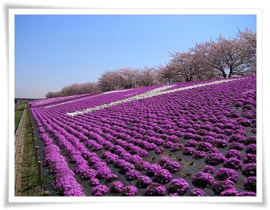 2011-04-13 小江戸~新河岸川~江戸 (16)